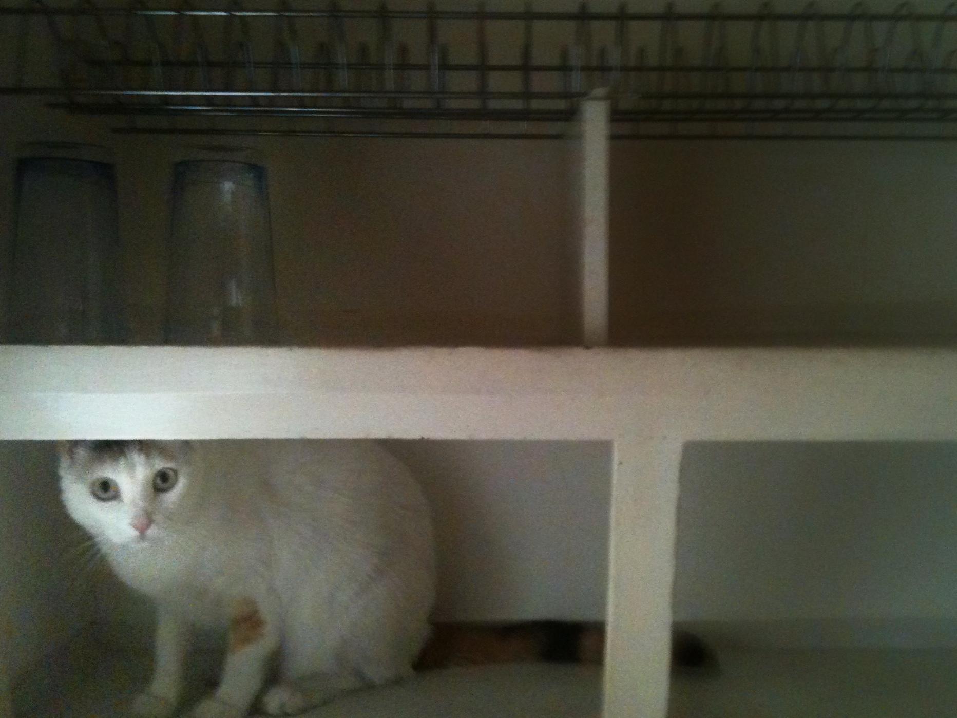 toupee in the cupboard